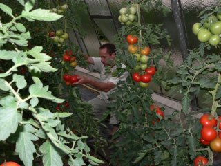 Garden brother in the tomato patch