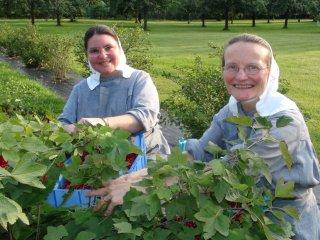 Sisters picking berries