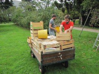 Bringing home the harvest